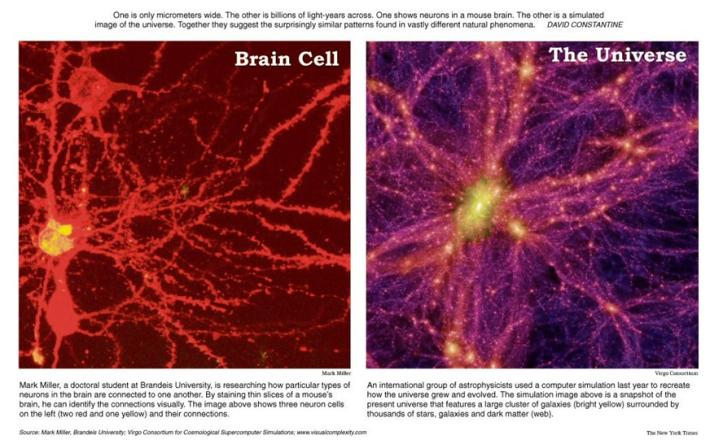 Brain-Cell-vs-Universe